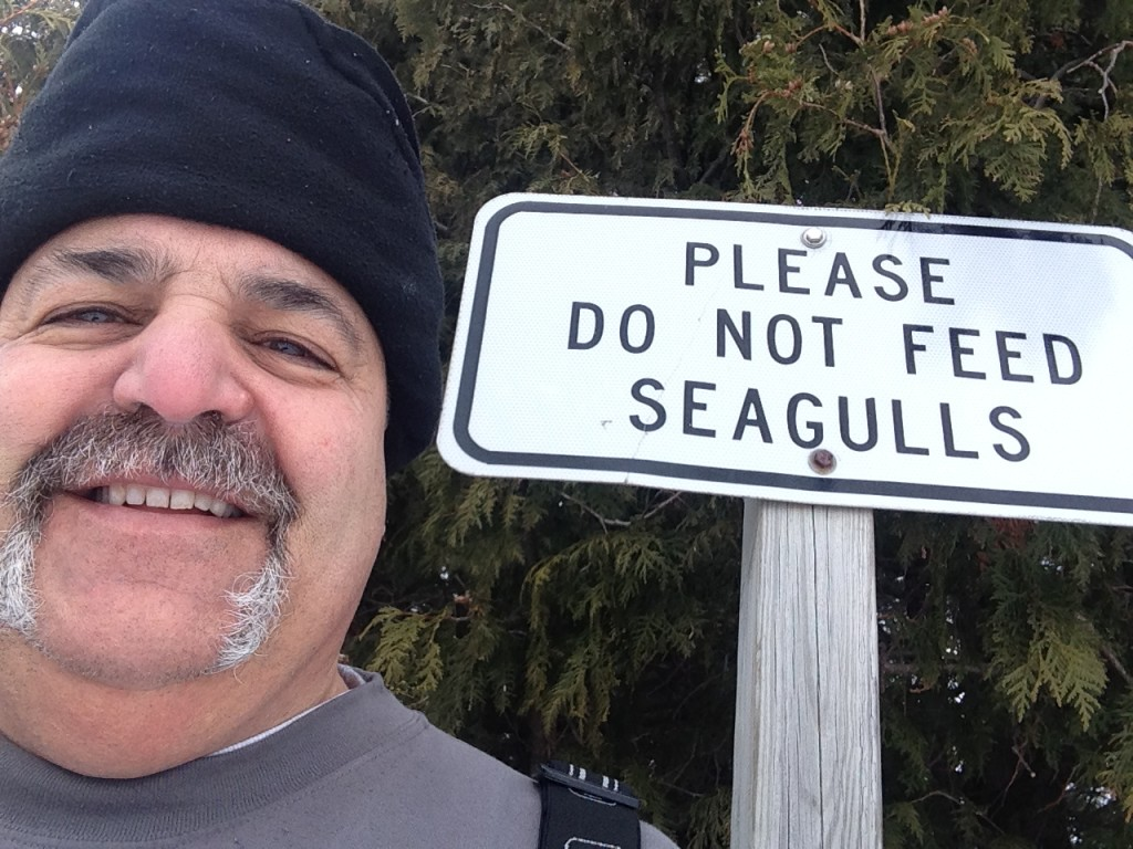 Please don't feed the seagulls or the Greeks