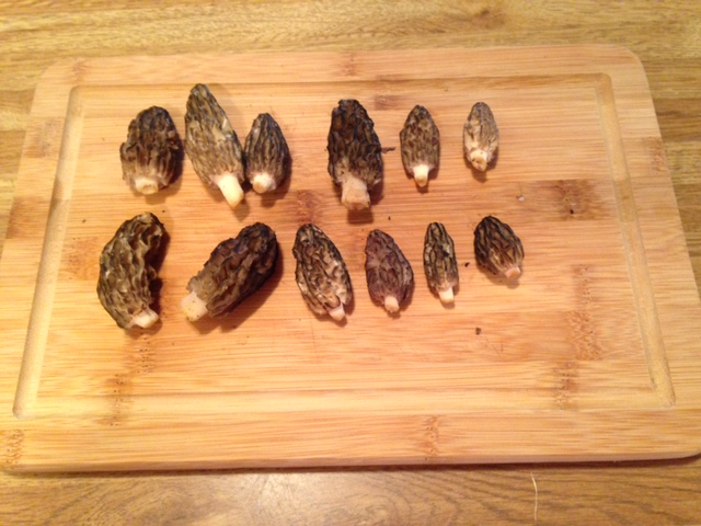 first morels of the season